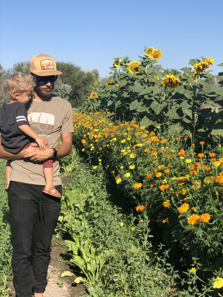 A man and his son walking down a field of sunflowers.